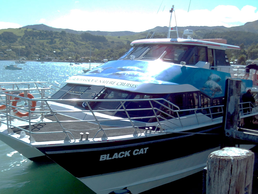 Black Cat Akaroa